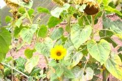 Autumn_flowers_2